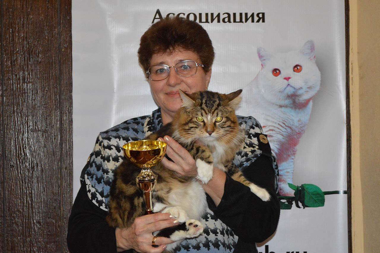 1 место BOB взрослые. курильский бобтейл,кот Эш Шикотан Кэт , г Тула.ШишковаТ.В.