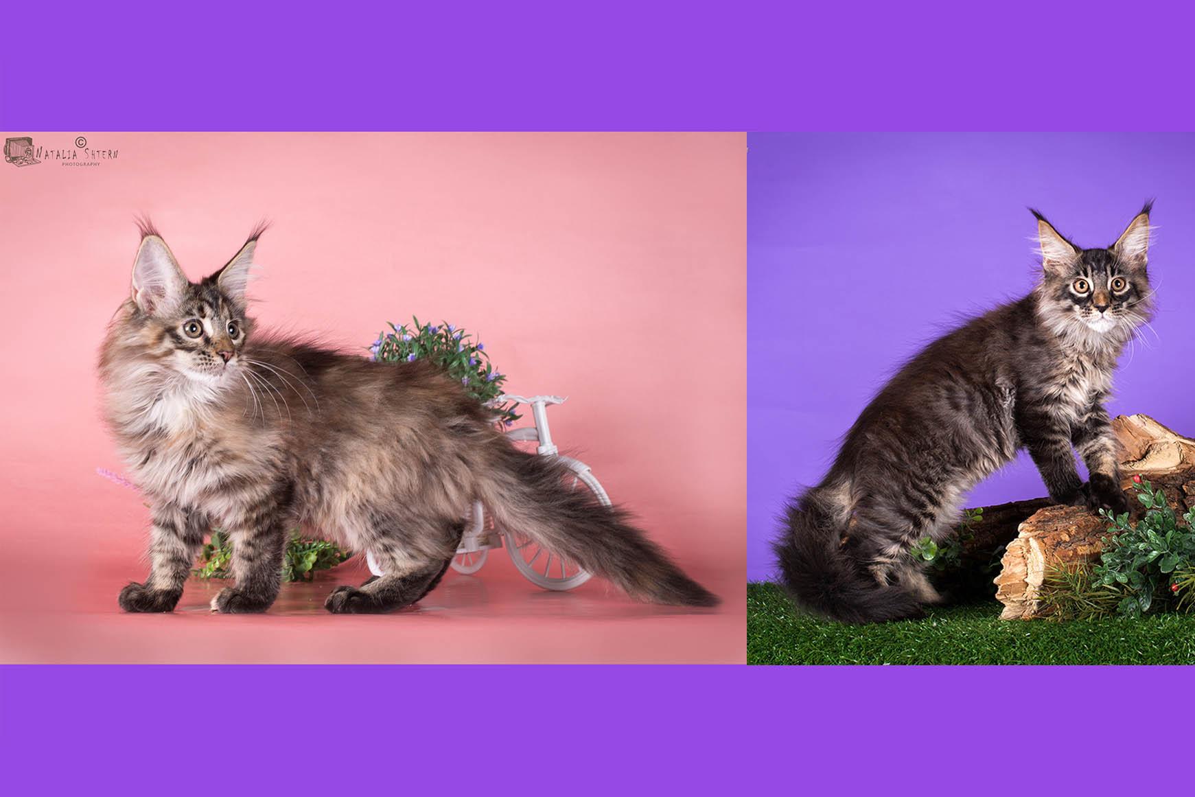 питомник кошек в орле для термобелья